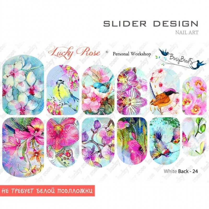Слайдер дизайн WHITE BACK 24